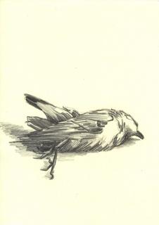 toter-vogel-zeichung-01-klein
