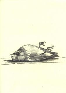 toter-vogel-zeichung-03-klein